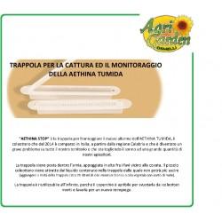 APICOLTURA Trappola Aethina Tumida